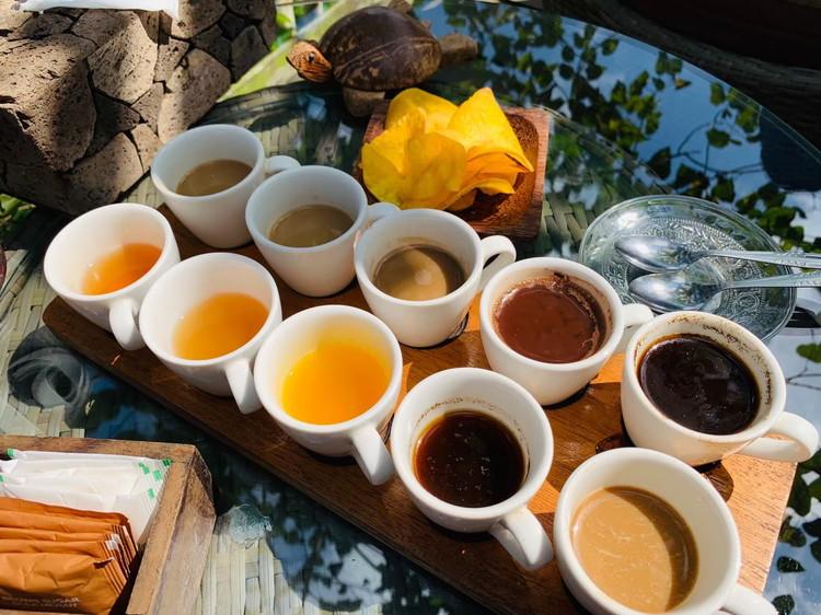 バリ・プリナ コーヒーの十種飲み比べセット